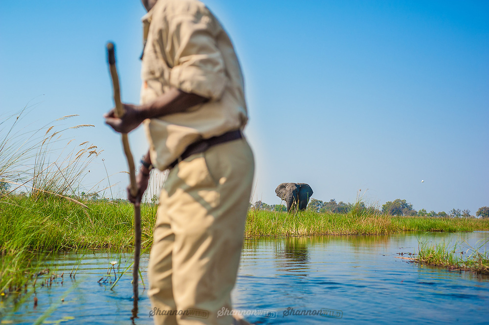 A ranger guides a mokoro through the Okavango Delta in Botswana as an elephant looks on.