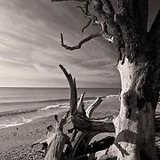 Botany Bay, Edisto beach, South Carolina