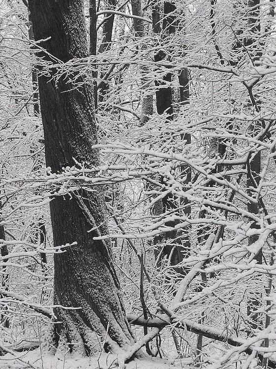 Winter Snow Blast, Lower Huron Metro Park