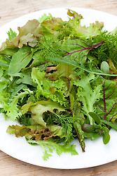 Summer baby leaf salad leaves on a plate. Wild rocket, Mustard, Sorrel, Lettuce, Carrot leaf