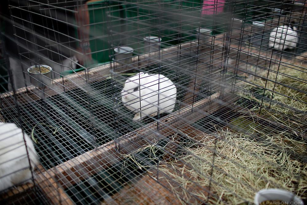 A rabbit on exhibit.