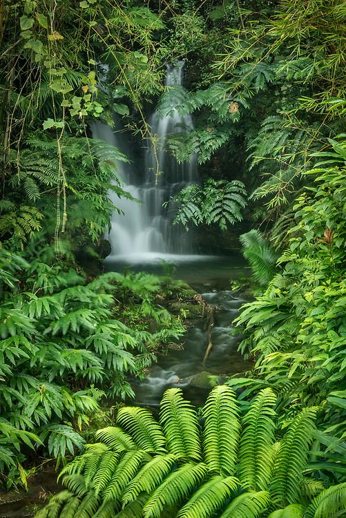 Waterfall on the trail to Akaka Falls; Akaka Falls State Park, Hamakua Coast, Island of Hawaii.