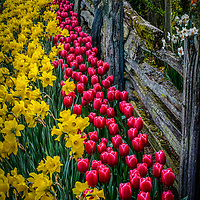 Flowers and Fences