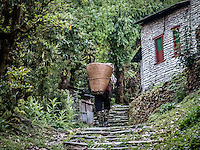 Man carrying a basket on the Annapurna Dhaulagiri trail between Swanta & Ulleri, Nepal.