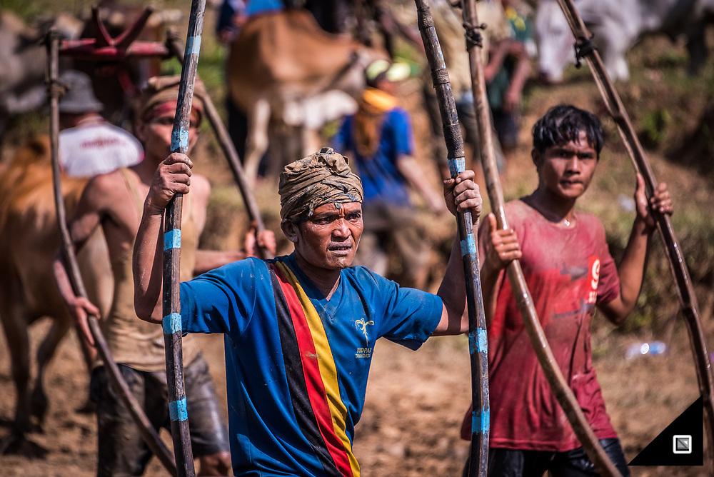 Indonesia - Sumatra - Pacu Jawi
