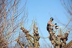 GB Tree Surgeons