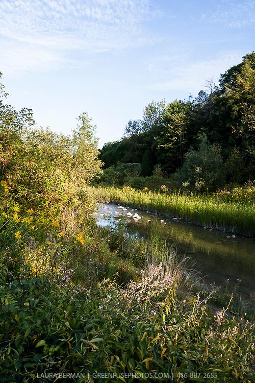 Little Rouge Creek in Toronto's Rouge Park.