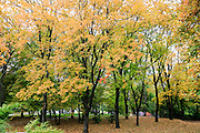 Park in Autumn Photographed in Warsaw, Poland