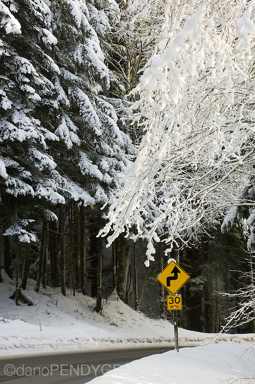 Snow covered branches hang over a bend in the road near Mt. Baker, Washington.