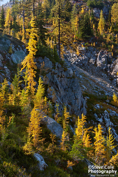 Changing of the Larch - Wenatchee National Forest