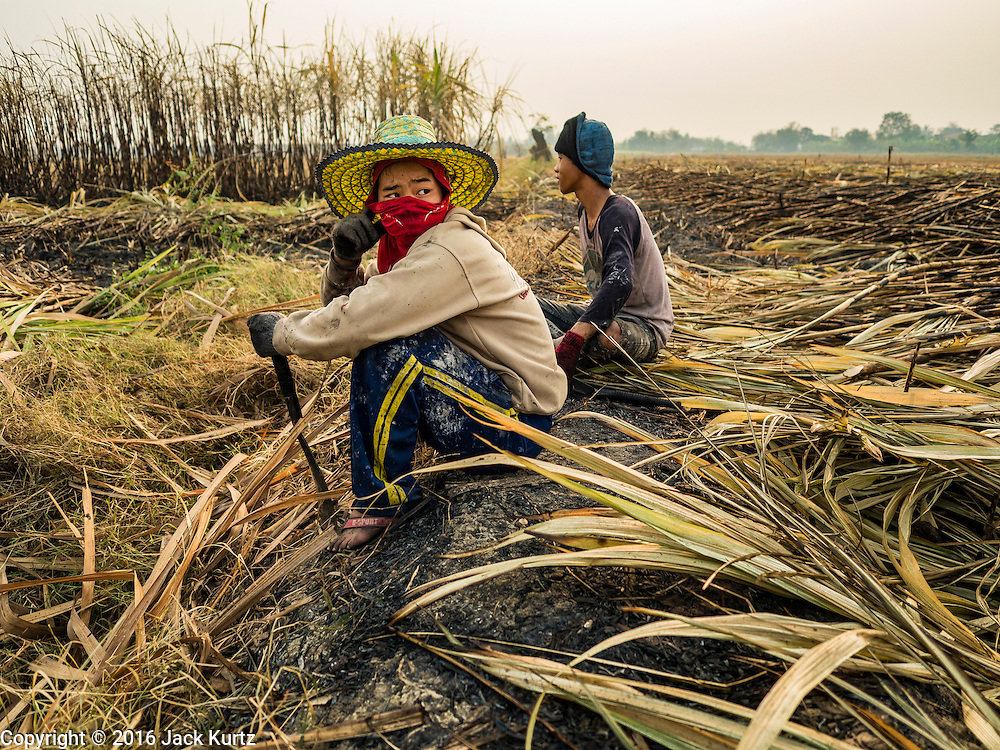 02 FEBRUARY 2016 - NONG LAN, KANCHANABURI, THAILAND: Migrant farm workers from eastern Thailand rest on the edge of a sugar cane field during the harvest in Kanachanaburi province, in western Thailand. Thai sugar cane yields are expected to drop by about two percent for the 2015/2016 harvest because of below normal rainfall. The size of the crop is expected to increase slightly though because farmers planted more sugar cane acreage this year. Thailand is the second leading exporter of sugar in the world. Thai sugar growers are hoping a good crop would make up for shortages in global markets caused by lower harvests in Brazil and Australia, where sugar yields have been stunted by drought. Because of the drought in Thailand, sugar exports are expected to drop by up to 20 percent, contributing to a global sugar shortage. The drought is is also hurting the quality of Thai sugar, because sugarcane grown in drought is less sweet than normal so mills need to process more cane to make the same amount of sugar. Thai sugar farmers have lost 20 percent to 30 percent of their output this year because of the drought.          PHOTO BY JACK KURTZ