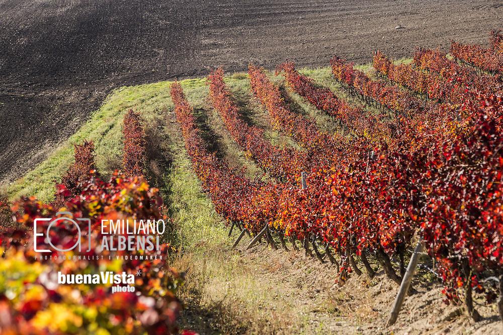 Barile, Basilicata, Italia, 2014<br /> Vitigni di Aglianico del Vulture, vino DOC prodotto nella zona del Vulture, in provincia di Potenza (Basilicata). <br /> <br /> Barile, Basilicata, Italy, 2014<br /> Vineyards of the Aglianico del Vulture, an Italian red wine produced in the Vulture area of Basilicata. It was awarded Denominazione di Origine Controllata (DOC) status in 1971 and the Denominazione di Origine Controllata e Garantita (DOCG) status in 2011.