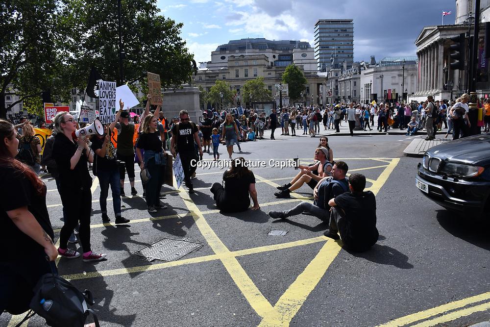 Vegan activists of Animal Rebellion sitin and blockade Charing Cross, on 17 August 2019, London, UK