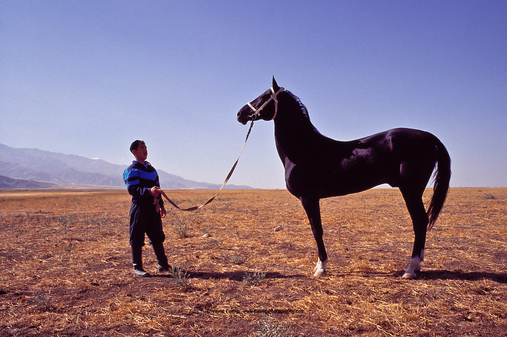Arguvan, Grandson of Absent, an Olympic Champion Akhal-Teke horse in the Lugovoi district.  Absent was the most successful horse in olympic history winning a gold medal, silver medal and two bronze medals in dressage at three separate Olympic games in the 1960's.