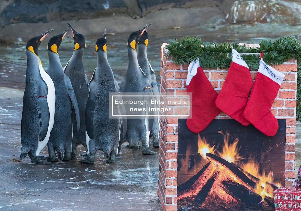 Keepers at Edinburgh Zoo have created a large fireplace hung with stockings and surrounded by Christmas presents for the penguins.