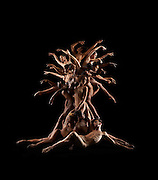 Human Nature, Tree of life