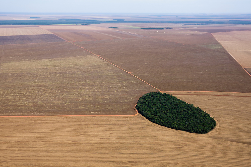 A patch of Amazon rainforest remains amidst farmland in Mato Grosso, Brazil, August 9, 2008. Daniel Beltra/Greenpeace