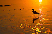 Seagull On Golden Sand