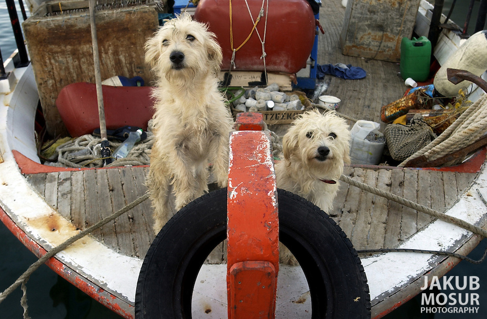 Two dogs guard their boat home at a harbor in Iraklio on the island of Crete in Greece on October 21, 2002. Photo by Jakub Mosur