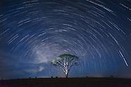 Vietnam Images-tree-startrails-Phan Thiết