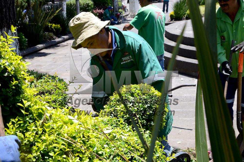 Mas de 50 figuras en arbustos de jardineras de la plaza for Jardines con arboles y arbustos