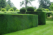 A fabulously sculptural clipped yew (Taxus baccata) hedge surrounding the formal West Garden at Hatfield House. The rounded blocks of yew at the four corners are topped with pebble-like flattened spheres.<br />