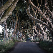 Now best known as a location on the TV show Game of Thrones, the Dark Hedges of County Antrim. <br /> <br /> This group of trees are thought to be around 300 years old. They are reputedly haunted by a spectral 'Grey Lady' and form an arc over the road. They have become a much-photographed natural monument.