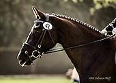 Horse No 42