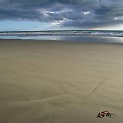 Brighton Beach, Christchurch, New Zealand. Photo by Jen Klewitz
