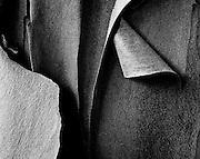peeling  bark Pacific Madrona (Arbutis Menziesii), Kitsap Peninsula, WA, USA high contrast black and white