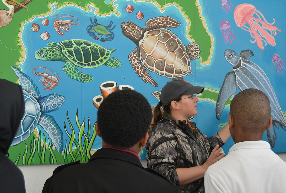 Students learn about sea turtles.