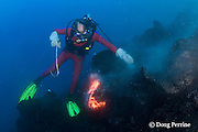 diver Bud Turpin and erupting pillow lava, at underwater eruption of Kilauea Volcano, Hawaii Island ( the Big Island ), Hawaii, U.S.A. ( Central Pacific Ocean ) MR 381