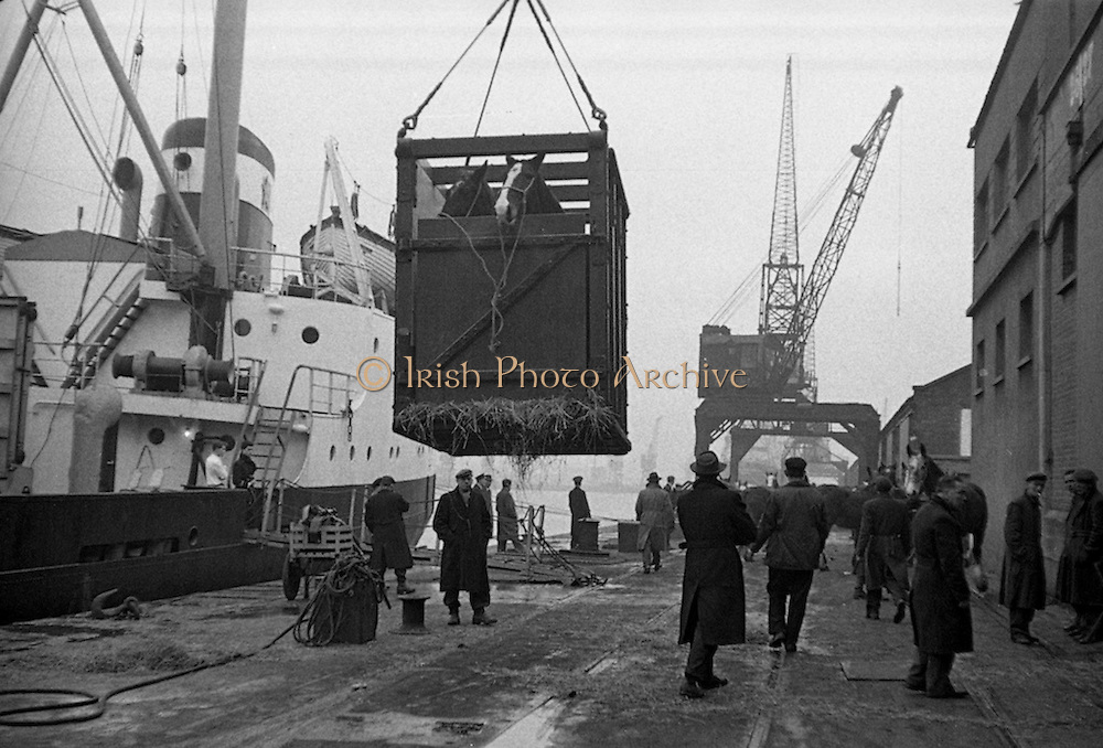 16/01/1960<br /> 01/16/1960<br /> 16 January 1960<br /> Horses for slaughter being loaded for export to the Netherlands from Dublin. Horses being loaded by crane onto the Dutch ship &quot;Theano&quot;.