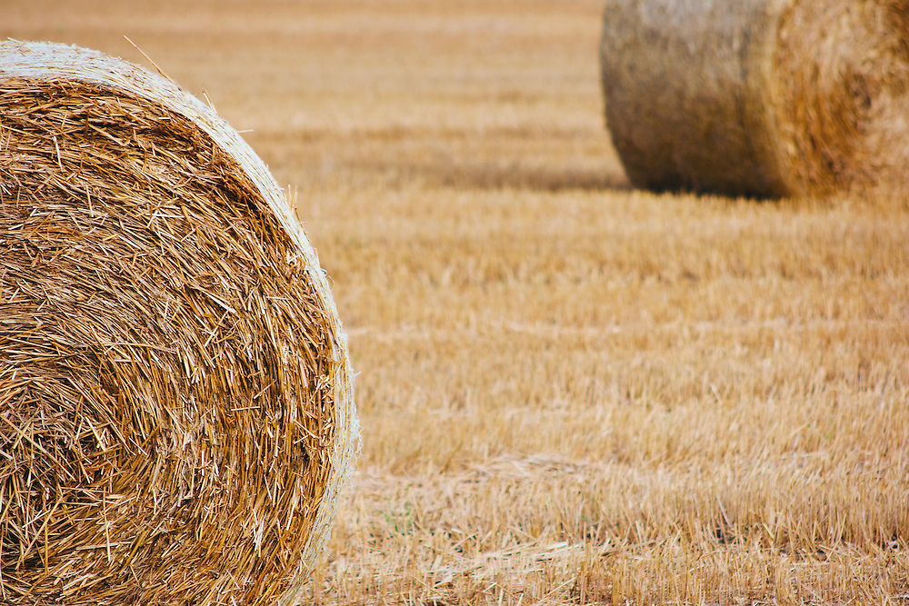 Agriculture in Skåne, Sweden.