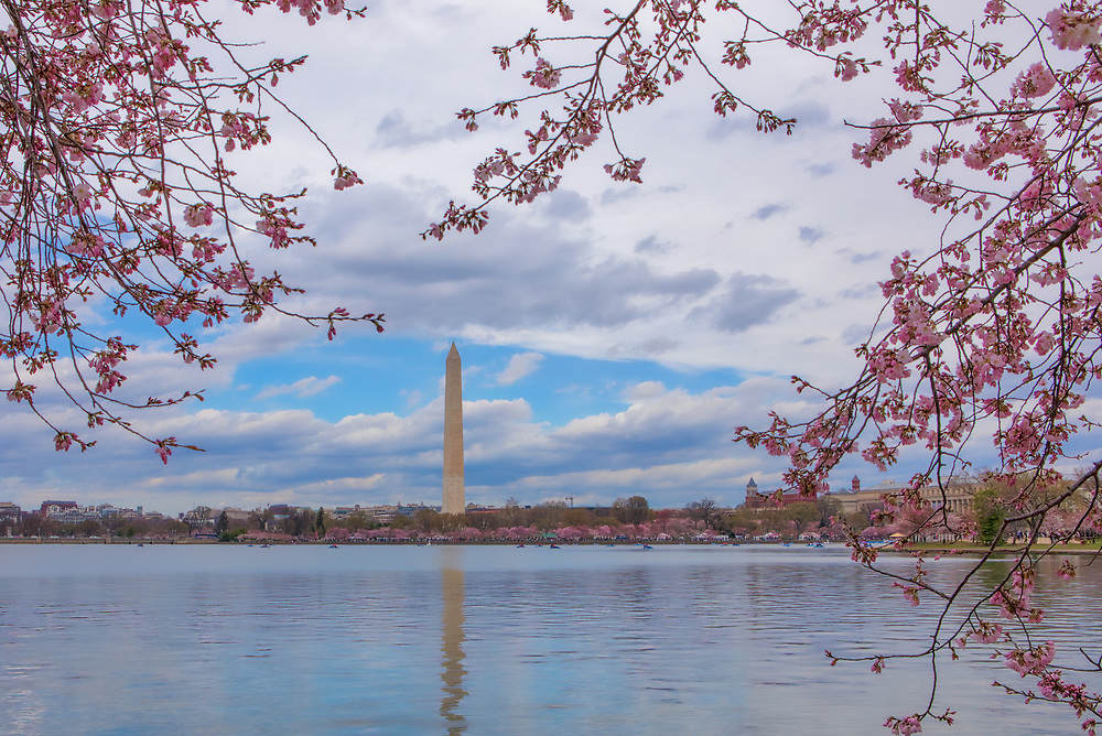Historic Washington DC landmark photography image displaying the Washington Memorial reflected in the Tidal Pool surrounded by beautiful Cherry Blossom.   <br />