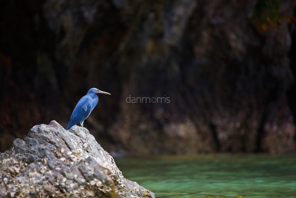 Heron rests on rock, Krabi, Thailand