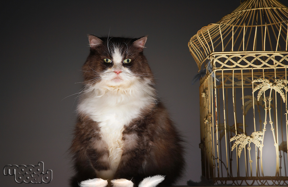 Cat by Empty Birdcage