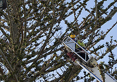 Tauranga-Kite surfer rescued uninjured from tree at Mt Maunganui