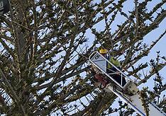 Tauranga-Kite surfer rescued uninjured from tree at Mt Maunganui