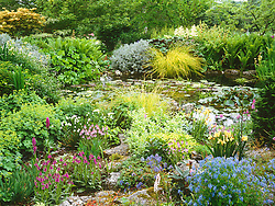 The rock garden and upper pond at Glen Chantry. Plants include ochids, corydalis, Carex elata 'Aurea', Alchemilla mollis, Ligularia 'Desdemona'. Design: Sue and Wol Staines