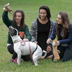 Puppies on the Green - 12/09/14