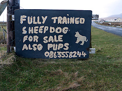 Sign advertising trained sheepdogs for sale in County Mayo Ireland