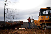 Pictures of timber being clear cut in Eastern, Ky., for use in lumber and other projects......Photo by Jim Winn - Winn Photography  - www.winnphotography.com