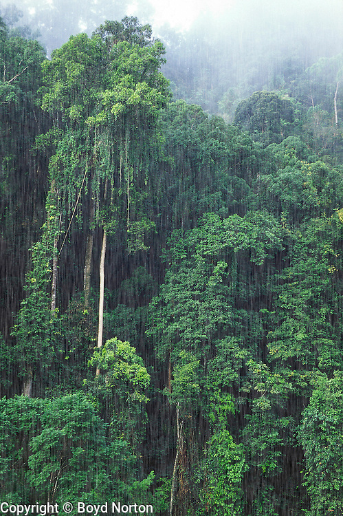 Rain forest,  Danum Valley Rainforest Preserve, Sabah, Borneo, Malaysia.