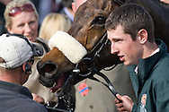 Winning horse Ballabriggs pictured in the winners enclosure after being ridden to victory by Jason Maquire in the 2011 John Smith's Grand National.