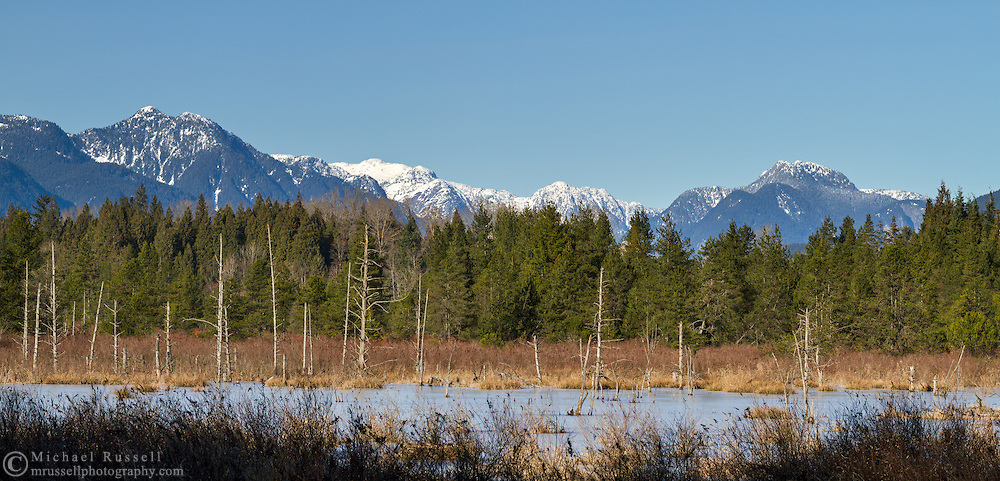 Langley Bog and the Coast Mountains from the new viewing platform.  The viewing platform can be reached from Houston Trail at Derby Reach Park in Langley, British Columbia, Canada. Notable Coast Range peaks here include Widgeon Peak, Debeck Peak, and Gloomy Peak (L to R).