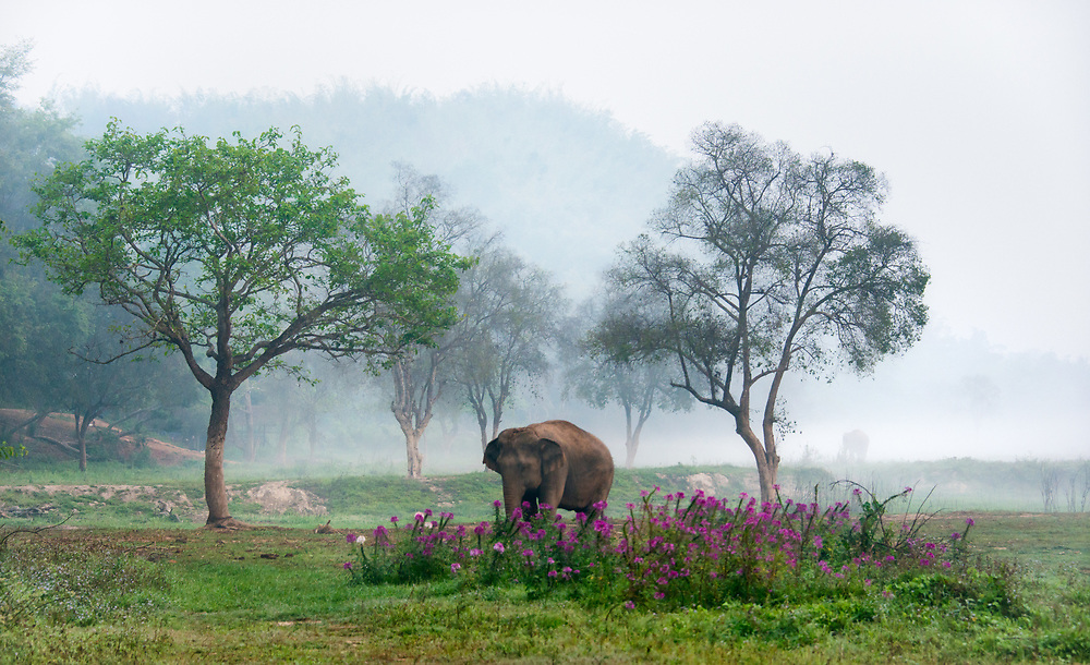 Golden Triangle Asian Elephant Camp, Chiang Rai