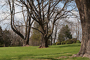 Trees on the grounds of Ash Lawn Highland, home of President James Monroe.