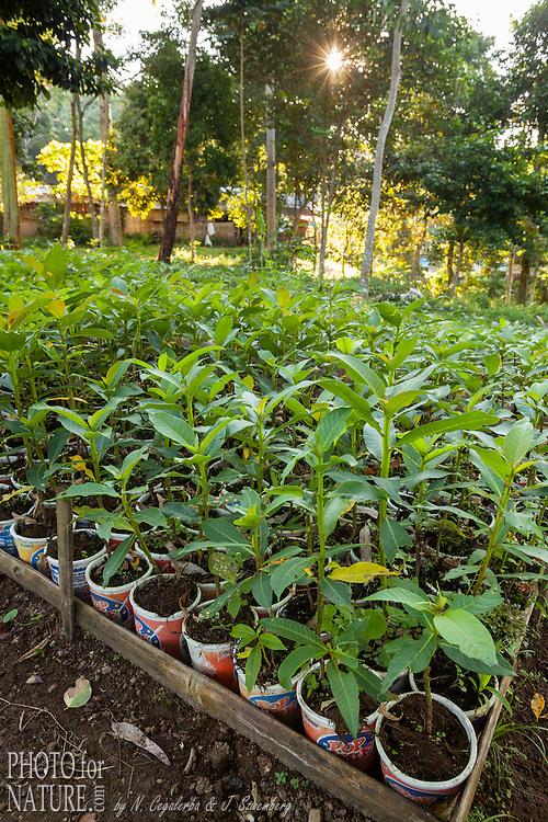 Indonésie, Petites îles de la Sonde Occidental, Lombok, WWF New Trees Project, pépinière // Indonesia, West Nusa Tenggara, WWF New Trees Project, plant nursery