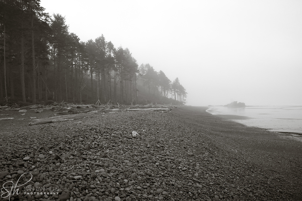 Ruby Beach in fog - WA
